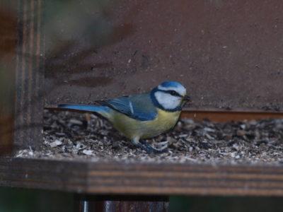 giardino degli uccelli