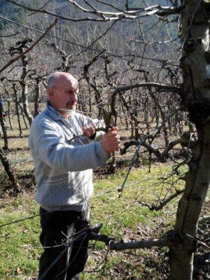 Corso di coltivazione e potatura del melo a s felice di narco for Potatura del melo