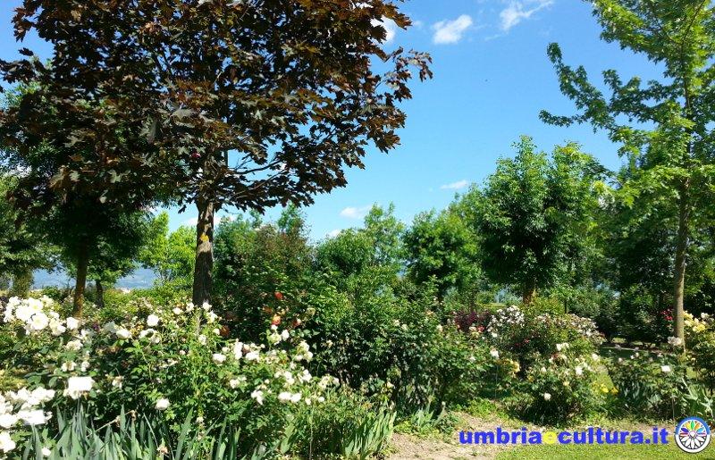 Il giardino delle cento rose un romantico arcobaleno di profumi e colori - Rose coltivazione in giardino ...