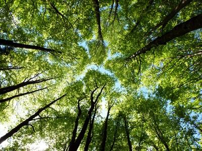 alberi un albero in più