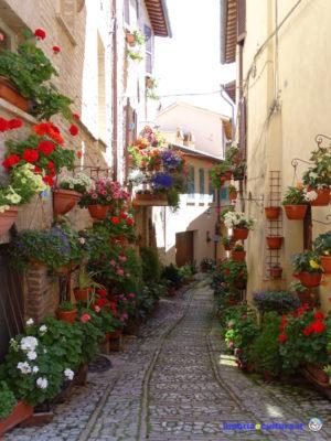 vicolo fiorito spello finestre balconi vicoli fioriti incontri per le strade