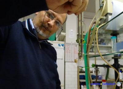 colture in vitro maurizio e ivo micropropagazione
