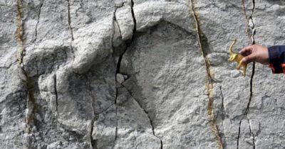 dinosauro bolivia