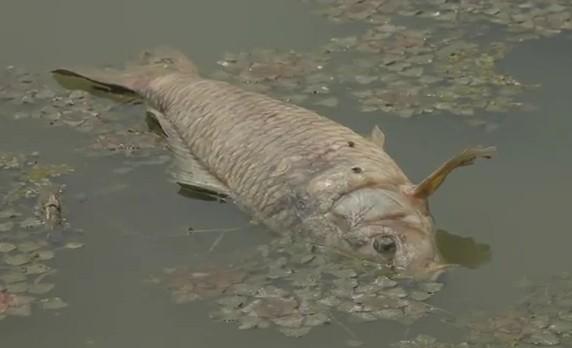 strage pesci