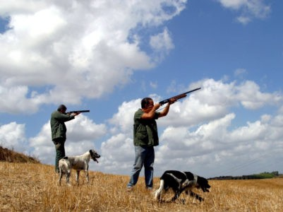 tortora selvatica lipu caccia in calabria munizioni al piombo bracconaggio