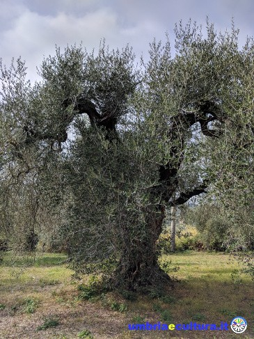 olive4climate