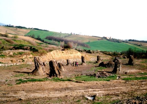 fossil forest foresta fossile di dunarobba