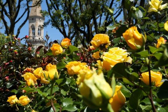 perugia flower show