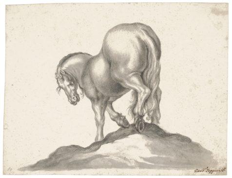 cavallo visto da dietro jackie kennedy