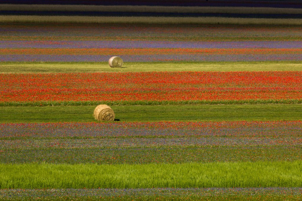 fiorita di castelluccio di norcia