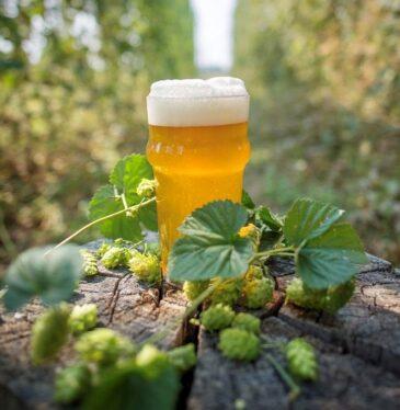 beer & hops
