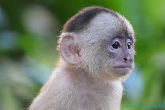 macaco sperimentazione animale