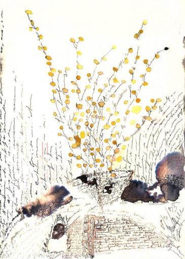 premio mimosa